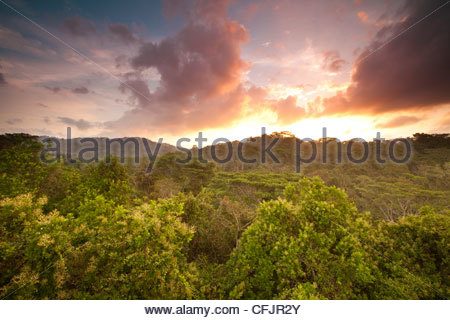 Sunrise in Soberania national park, Republic of Panama. - Stock Photo