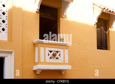 A cute dog looks out from a gap in a balcony of an orange painted building in San Juan, Puerto Rico - Stock Photo