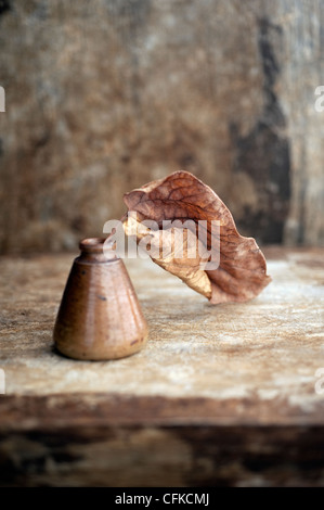 Leaf photographed in an antique ink bottle. - Stock Photo