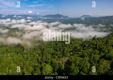 Low cloud hanging over lowland Dipterocarp rainforest. Danum Valley, Sabah, Borneo. - Stock Photo