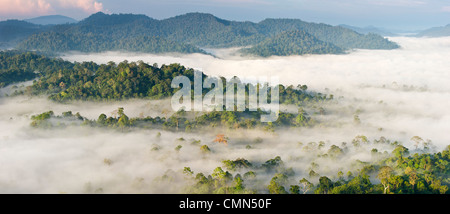 Mist and low cloud hanging over Lowland Dipterocarp Rainforest, just after sunrise. Heart of Danum Valley, Sabah, - Stock Photo