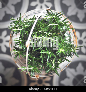 Close-up of green herb in basket - Stock Photo