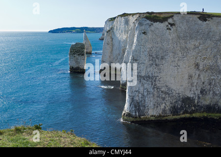 Chalk stacks near Old Harry rocks at Handfast Point on the Isle of Purbeck in Dorset UK. - Stockfoto