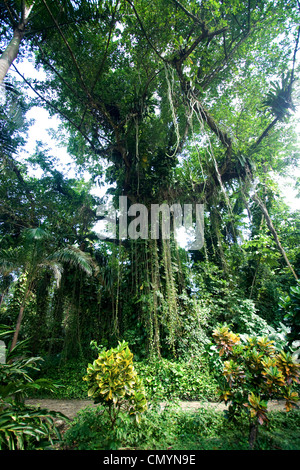 Jamaica Port Antonio Tropical landscape near Frenchmans Cove - Stock Photo