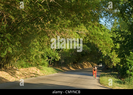 Jamaica St. Elisabeth Bamboo Avenue 2 1/2 miles long Bamboo trees overgrowing the road  like a tunnel - Stock Photo