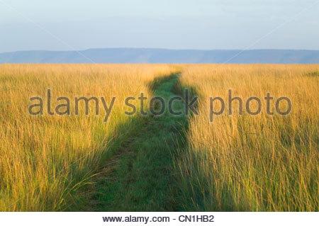 Path among tall grass on the savanah, Masai Mara National Reserve, Kenya - Stock Photo