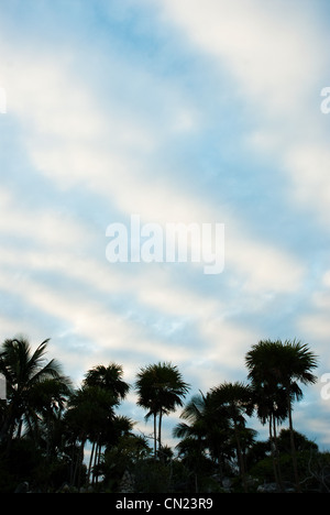 Palm trees, Tulum, Mexico - Stock Photo
