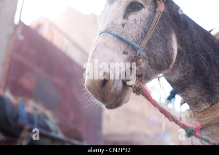 Donkey's head, low angle view - Stock Photo
