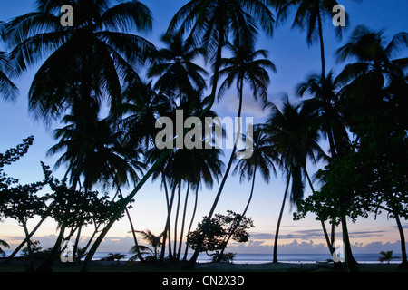 Palm trees in silhouette, Pigeon Point, Tobago - Stock Photo