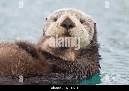 Female Sea otter holding newborn pup out of water, Prince William Sound, Southcentral Alaska, Winter - Stock Photo
