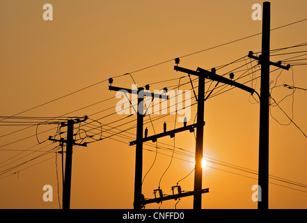 Telegraph  poles and telegraph wires at sunrise - Stock Photo