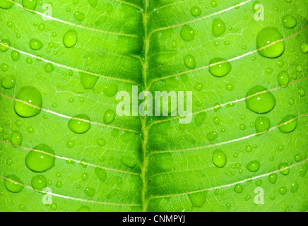 water-drop on a green leaf after rain - Stock Photo