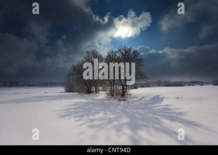 shadows on snow. Scenic winter landscape with sun and a tree group throwing long shadows on the snow, Germany, Saxony, - Stock Photo