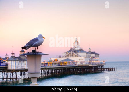 A seagull perched on a lamp post on front of Eastbourne pier, East Sussex, England, Europe. Focus on seagull. - Stock Photo