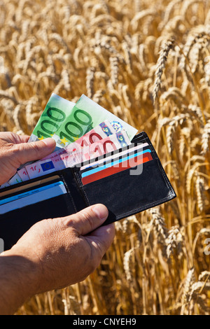 bread wheat, cultivated wheat (Triticum aestivum), symbol picture 'agricultural subsidies': man showing the Euro - Stock Photo