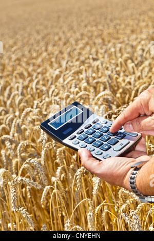 bread wheat, cultivated wheat (Triticum aestivum), farmer with pocket calculator in the hands over a mature wheat - Stock Photo