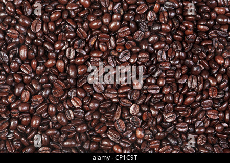 Photo of fresh roasted arabica and robusta coffee beans suitable for use as a background. - Stock Photo