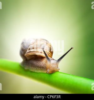 Snail crawling on green stem - Stock Photo
