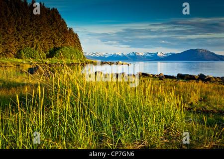 Scenic evening view of coastal grasses and Bartlett Cove, Glacier Bay National Park & Preserve, Southeast Alaska, - Stock Photo