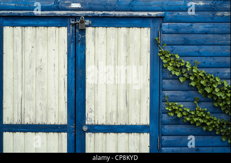 Detail of the Front of a Beach Hut with Blue & White Distressed Paint & Green Ivy. - Stock Photo