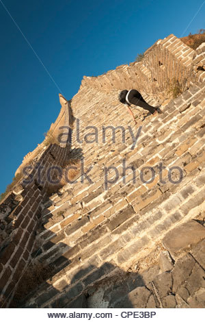 Woman climbing steep steps, Great Wall of China, Huanghuacheng (Yellow Flower), Wild Wall, Jiuduhe Zhen, Huairou, - Stock Photo