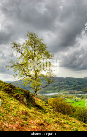 Elter Water and Lake of the same name are located in the jaws of the Great Langdale Valley in the English Lakes - Stock Photo