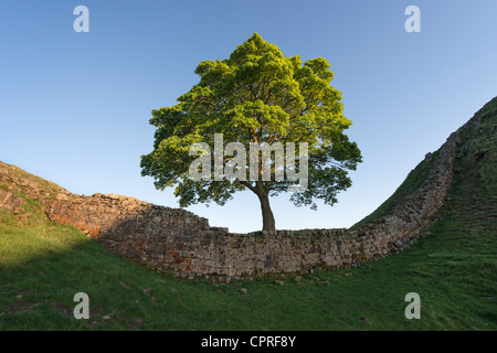 Hadrian's Wall at Sycamore Gap - Stock Photo