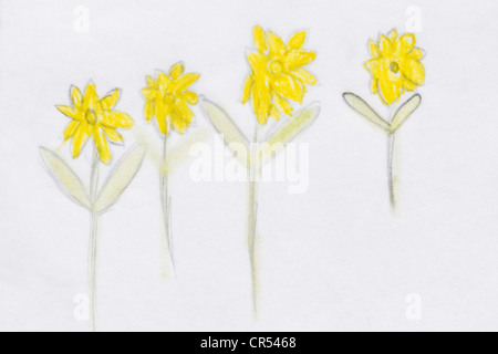 Childs drawing of daffodil flowers - Stock Photo