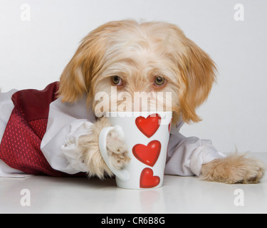 Dog in dog coat lying with cup - Stockfoto