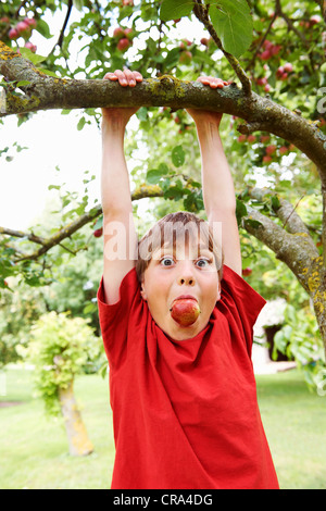 Boy with apple in his mouth playing in fruit tree - Stockfoto