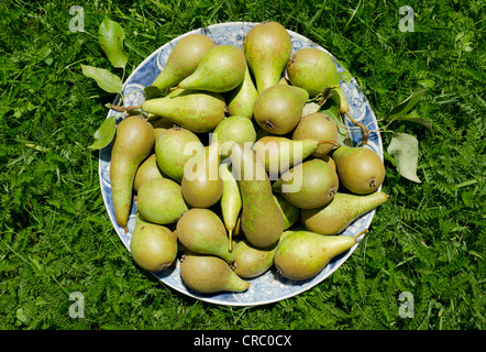 Plate of fruit in grass - Stock Photo