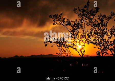 A sunset colors the sky on the first day of monsoon season in the Sonoran Desert, Tucson, Arizona, USA. - Stock Photo