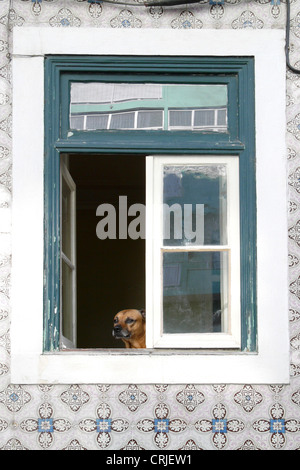dog looking out of a window at the Gra�a Quarter, Portugal, Lisbon - Stock Photo