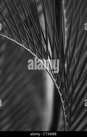 Palm - Stockfoto