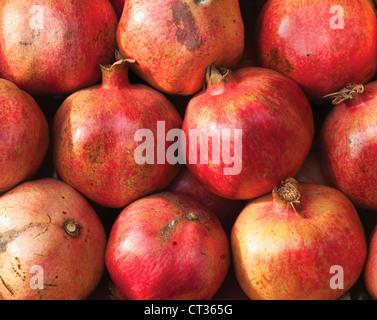 Punica, Pomegranate - Stock Photo
