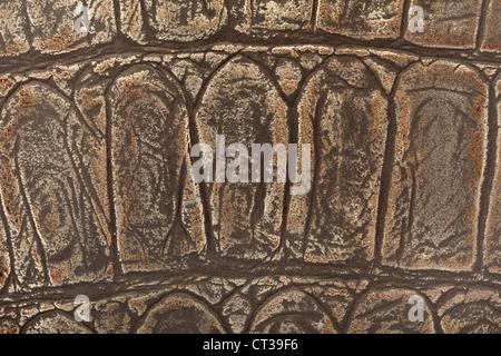 Wild animal leather texture background - Stock Photo