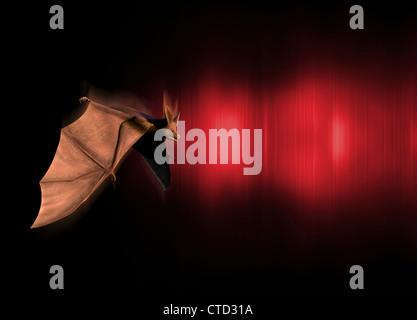 Echolocation  artwork - Stock Photo