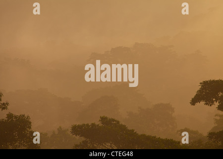 Mist at sunrise in Soberania national park, Republic of Panama. - Stock Photo