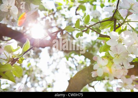 White flowers growing on tree - Stock Photo