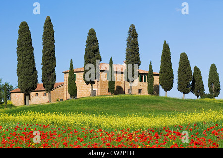 Villa with Cypress trees and Poppies near Pienza, Tuscany - Stock Photo