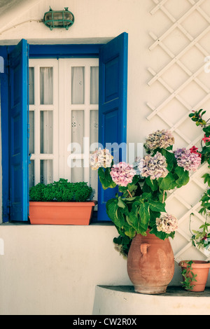 a window with blue shutters and hydrangeas - Stock Photo