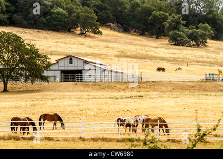 A California Horse Ranch in the foothills of the Sierra Nevada Mountains Highway 49 California's Gold Country - Stock Photo
