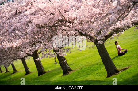 cherry tree jewish single women For many around the world, the cherry blossom tree is a reminder of how precious their lives really are this idea is tied to buddhist theme of mindfulness—the practiced ability to live in the .