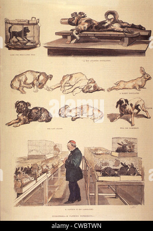 Louis Pasteur (1822-1895) in laboratory, working on hydrophobia (rabies) experiments, with rabbits and dogs. 1885. - Stockfoto