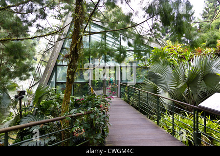 Cool house inside the National Orchid Garden in Singapore. The cool house is meant to showcase the more exotic varieties. - Stock Photo