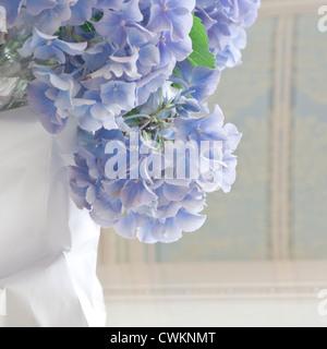 blue hydrangea on a table - Stock Photo