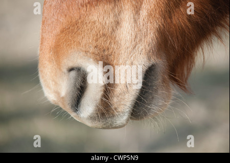 Close-up of donkey's muzzle - Stock Photo