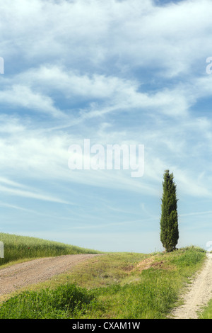 Lonely cypress tree on the top of a Tuscan hill near Pienza in Italy - Stock Photo