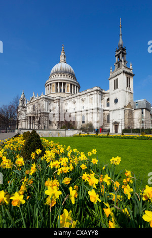 St. Paul's Cathedral with daffodils, London, England, United Kingdom, Europe - Stock Photo