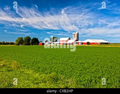 American Country Farm with soybean plants and blue sky - Stock Photo